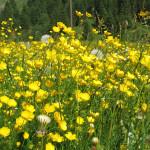Frühling in Rauris